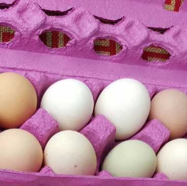 biofarm pasture raised chicken eggs